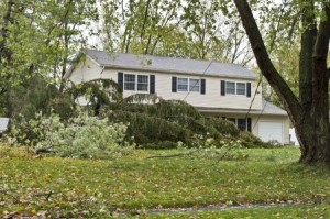 storm clean-up services