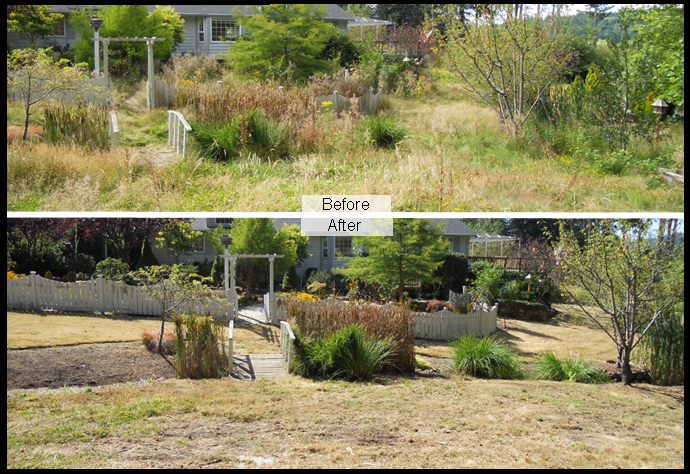 landscape cleanup services
